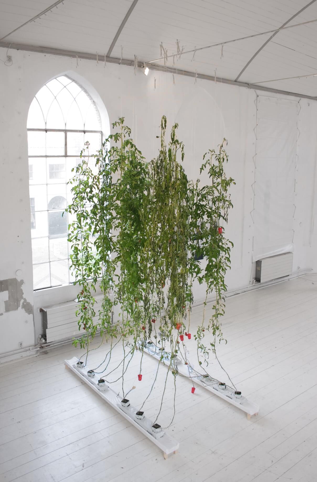 Playinggod_hoorn_meenan_plantart_contemporyart_installation_art_tomatoes_IMG_7866.jpg